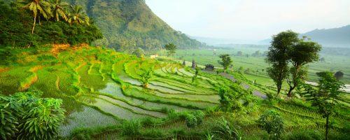 Oplev tropiske skove på din rejse til Bali