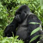 Jungletrekking Rwanda