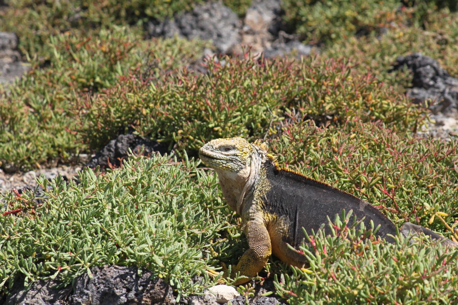 Rundrejse med cruise til Galapagos og Ecuador