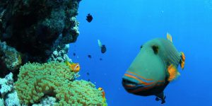 11110_Soneva Fushi - Sea Life