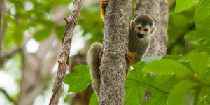 4-Wildlife-at-Arenas-Del-Mar