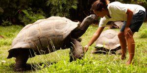 Aldabra Skilpadde Fregate Seychellerne Voya Travel