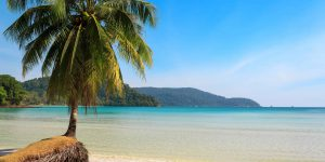 Beautiful-palm-tree-on-a-tropical-island-beach