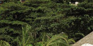 Four-Seasons-Seychellerne-pool