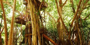 Fregate Island Voya Travel Tree top dining