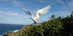 Fregate Terne Seychellerne Voya Travel