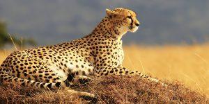 Kenya Hakuna-matata-safari