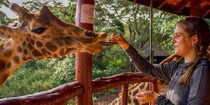 Giraf-center-5