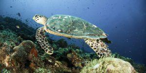 Centara Grand Island Resort & Spa Maldives Diving