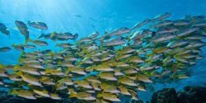 Innahura-snorkeling