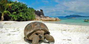 Seychellerne Voya