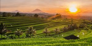 Rejse til Bali Indonesien