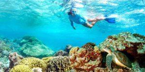 alphonse-experiences-snorkeling-4