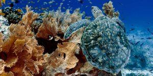 alphonse-island-marine-life-15