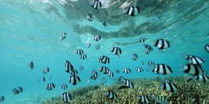 gili-lankanfush dykning Indiske Ocean Voya Travel