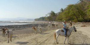 horses-cows-costa-rica