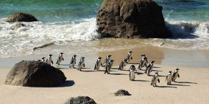 ooct_experiences_penguinparade