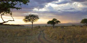 savanne-4